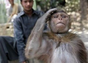 monyet2