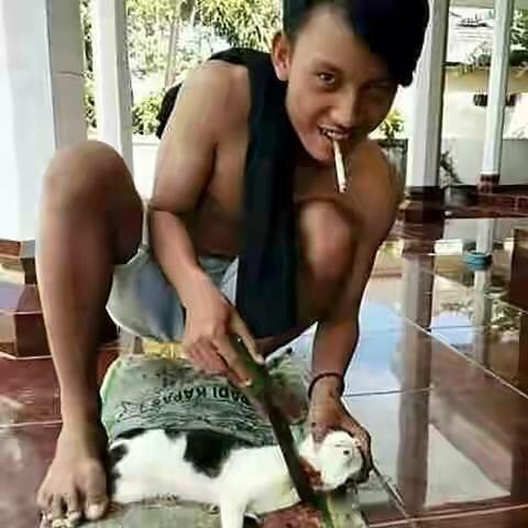 menyembelih-kucing